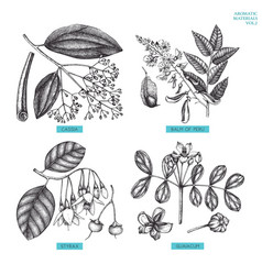 Aromatic and medicinal plant set vector