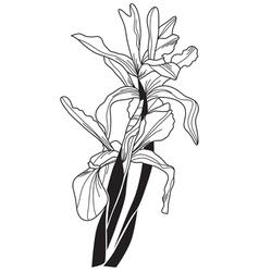 decorative iris vector image vector image