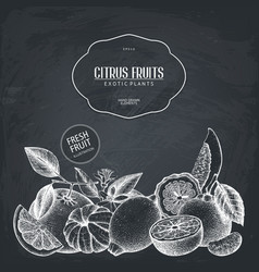 Vintage design with citrus plants sketch vector