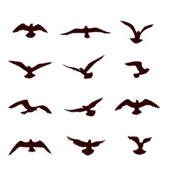 bird flying silhouette set wildlife icon vector image