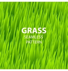 Green grass seamless pattern vector