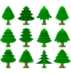 conifers coniferous trees vector image