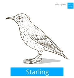 Starling learn birds coloring book vector image vector image