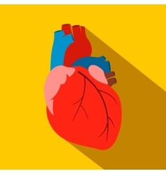Human heart flat icon vector