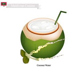 Coconut water drink a famous beverage in maldives vector