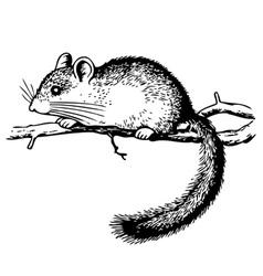 edible dormouse vector image