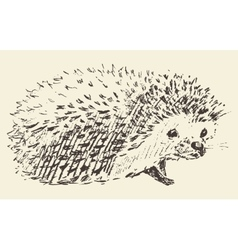 Hedgehog engraving style vintage drawn sketch vector image