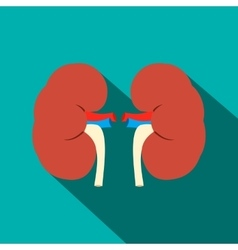 Human kidney flat icon with shadow vector