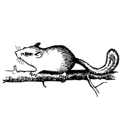 forest dormouse vector image