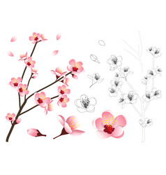 Momo peach flower outline vector