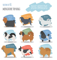 Dog breeds miniature toy dog set icon flat style vector