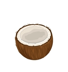 Coconut Fruits Isolated on White Background vector image
