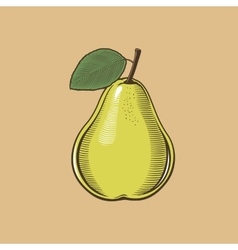 Pear in vintage style colored vector