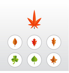 Flat icon foliage set of aspen alder leaf and vector