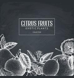 Vintage design with citrus plants sketch vector