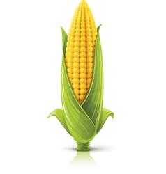 corncob vector image