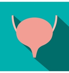 Bladder flat icon with shadow vector image