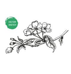 Appleflower sketch 1 vector