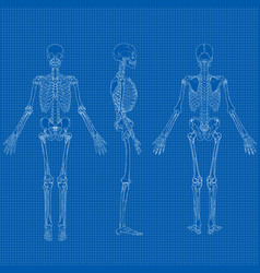 human skeleton blueprint vector image vector image