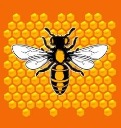 realistic bee vector image
