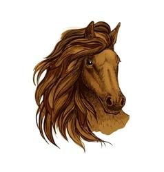 Arabian brown horse portrait vector image