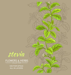 Stevia background vector