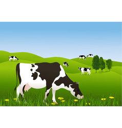 Cows in a meadow vector image