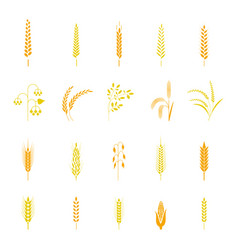 Wheat ears or rice icons set vector