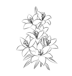 Lily sketch on white background vector