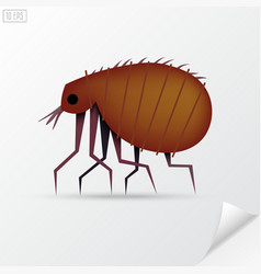 Cartoon brown insect flea in material style vector