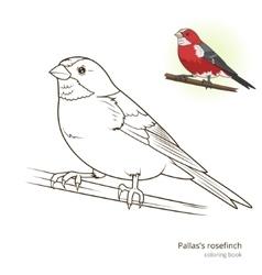 Pallas rosefinch color book vector image vector image