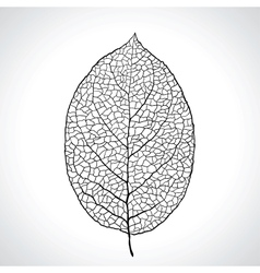 Black macro leaf natural isolated vector