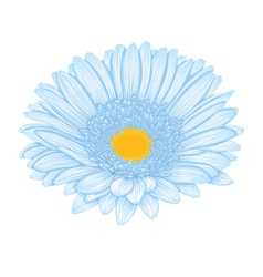 Beautiful blue gerbera isolated on white backgroun vector image