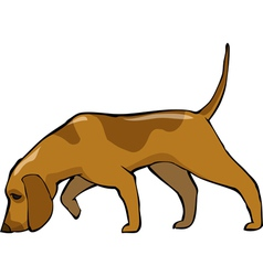 bloodhound dog vector image