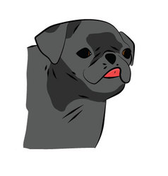 Small Black Pug vector image vector image