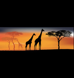 Desert view with giraffes background with african vector