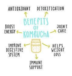 Health benefits of kombucha vector