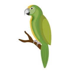parrot bird isolated icon vector image vector image