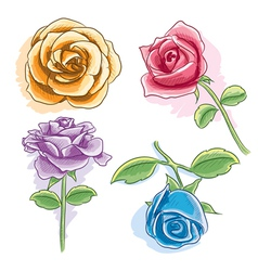 Watercolor rose vector