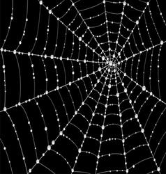Web in drops of dew vector