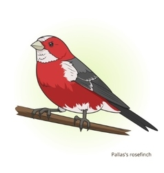 Pallas rosefinch bird educational game vector