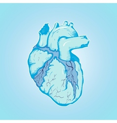 Heart of ice human blue with veins and ventricles vector