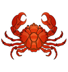 hand drawn cartoon crab character vector image
