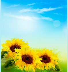 Nature background with yellow sunflowers and blur vector