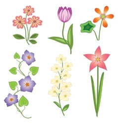 Flower set tulip camomile daisy petunia orchid vector