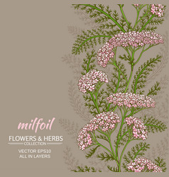 yarrow background vector image vector image