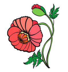 red poppies isolated on white background vector image