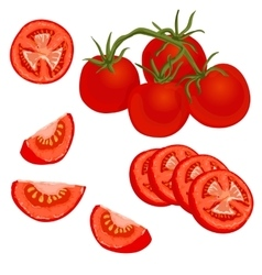 Colorful of tomato vector