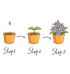 steps growing vector image