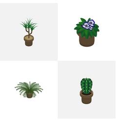 Isometric flower set of peyote flowerpot vector